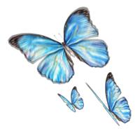 butterfly_fea
